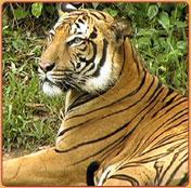 South India Wildlife Tour - Explore South India Wildlife